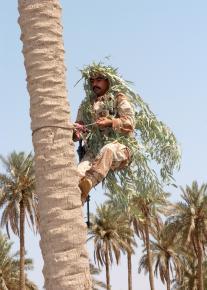 Palm tree sniper
